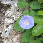 新型コロナウィルスに代わる沖縄のリスク