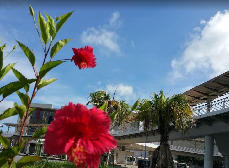 沖縄のコロナの状況と今後の対策