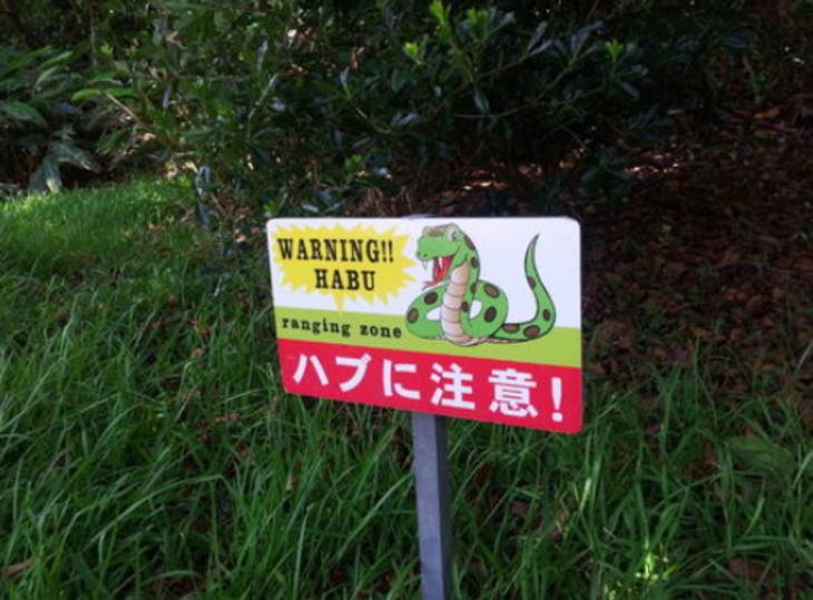 沖縄への移住者の心配事(ハブ編)