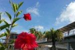 沖縄にも存在する反社な不動産会社の傾向
