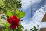 土地規制法の成立と沖縄の不動産売買への影響
