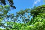 世界自然遺産登録に伴って沖縄の土地が値上がりするのか