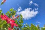 綺麗なバラと沖縄の美しい不動産にはトゲがある